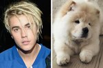 Justin Bieber Gave Up Another Dog, And The New Owner Is Paying Big