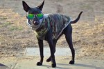 Stop Scrolling Through Facebook & Meet The World's Coolest Dog