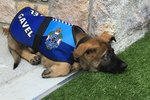 This Police Pup Is Fired For The Most Adorable Reason