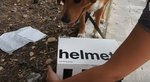 This Dog Found A Mysterious Box That Was Filled With The BEST Surprise