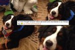 The Reason This Dog Is Attending A Furry Convention Will Make You LOL