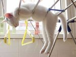 32 Cats Sleeping In Awkward Positions