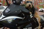 Cop Dog Now Patrols The Streets He Once Roamed