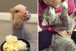22 Pets Who Prove Life Would be Bullsh*t Without Them
