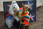 Costumed Canines Make The Scene At 'Howl-O-Ween' Pet Parade