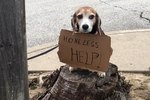 Shelter For Homeless Pets May Be Homeless Themselves If Developers Have Their Way