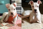 Doctors Wanted To Put This Legless Puppy Down, But Look At Him Now