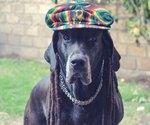Dogs Freaking *Love* Reggae Music, Says Science
