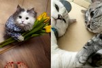 21 Photos That Prove Cats Are Actually Sweethearts