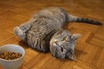 What Your Cat's Body Language is Telling You