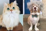 The 22 Cutest Pet Instagrams To Follow In 2017