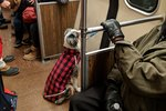 Dog Calmly Waits On Subway After He Is Separated From Owner