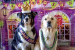 37 Mardi Dogs Parading In Their Finest Mardi Gras Regalia