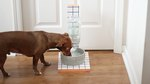 How To Make A Stylish Self-Filling Dog Water Bowl