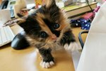Orphaned Kitten Steals Hearts And Productivity From Office Workers