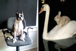 20 Animals Using Other Animals As Chairs