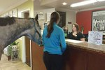 Woman Tries To Check Her Horse Into A Hotel & What Happens Next Is Surprising