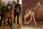 You Can Name April The Giraffe's Brand New Baby Boy
