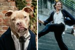 9 Dogs Who Stole Our Hearts As Classic RomCom Characters