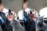 Just 26 Animals Who Are Total Drama Queens