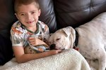 Deaf Rescue Dog And Special Needs Boy Become BFFs