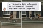 Neighbor Dogs Party On Roof Like It's 1999