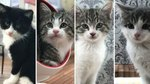 A Cat Reality TV Show Starring Adoptable Kitties? Yes, Please!