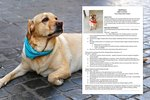 This Foster Dog's Resume Will Land Him A Job In Your Heart