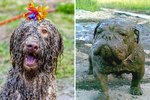 19 Things You'll Understand If Your Dog Loves To Get Muddy