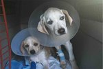 One Click Can Help Save These Two Pups From A Rare Disease