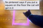 This Is What Happens When You Put Pinterest Legends About Pets To The Test