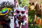 26 Of The Coolest Good Boys You'll Ever Scroll Through