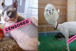 Facebook Doesn't Want You To See These 21 Extremely Naked Pets