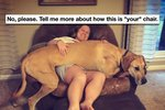 21 Things You'll Understand If You Have A Big Dog