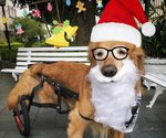 Dog's Christmas Photos Are The Best Thing You'll See This Holiday