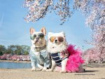 Bulldog & Pomeranian's Engagement Photos Will Have You Wishing For A Wedding Invite