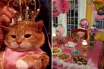 Please Watch This Cat Celebrate Her 15th Birthday With An Epic Quinceañera
