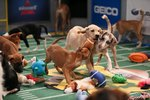 OMG, The Lineups For Puppy Bowl XIV Have Been Revealed!