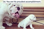16 Dogs To Share With Your Dad