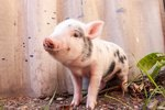 23 Perfectly Pink Piggies to Perk Up Your Day