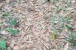 Do You See The Venomous Snake Hidden In This Photo?
