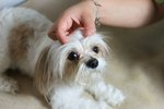 How to Cure Puppy Dandruff