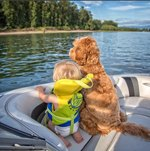 Lovely Labradoodle Helps Little Boy Transition To Foster Home