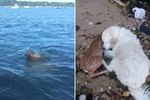 Brave Dog Saw A Baby Deer Drowning & You Won't Believe What Happened Next