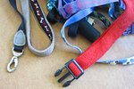 How to Measure the Girth of Your Dog for a Harness