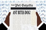 How to Treat Ant Bites on a Dog