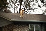 Owners Explain To Everyone Why Their Dog Pretty Much Lives On The Roof