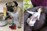 19 Dogs That Are SO You After Work