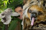 Literally Just 19 Of The Funniest Sloths We've Ever Seen