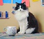 How to Make Catnip Tea